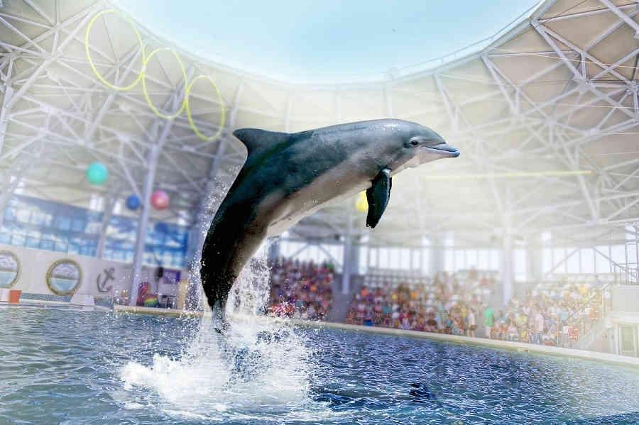 Дельфинарий, Евпатория: незабываемое шоу дельфинов