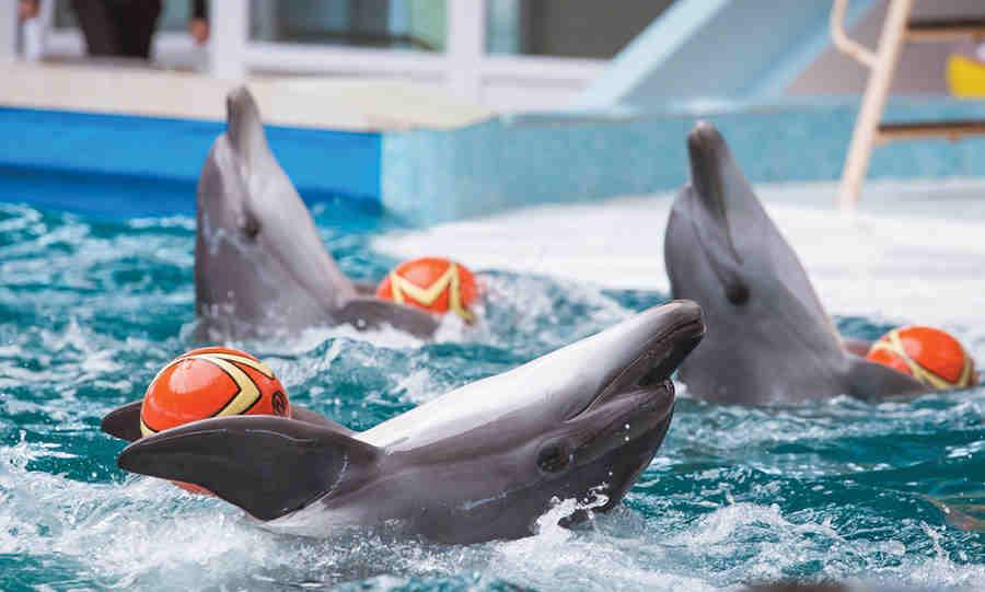 Дельфинарий, Евпатория: официальный сайт 2019, расписание представления