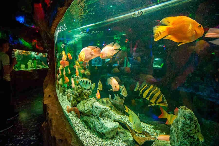 Аквариум, Евпатория: в гостях у морских обитателей