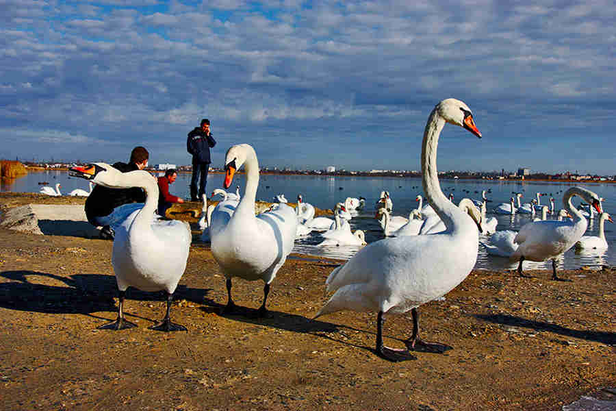 Лебединое озеро Евпатория