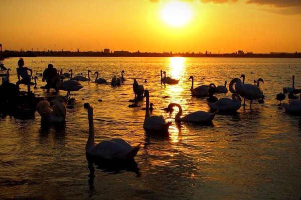 Фото озера с лебедями в Евпатории