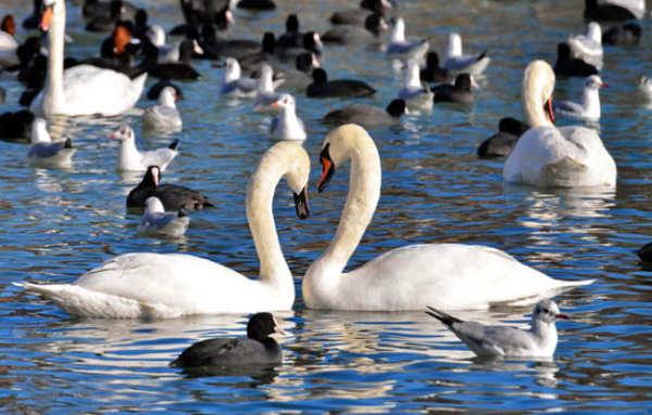 Как добрать до Лебединого озера в Евпатории