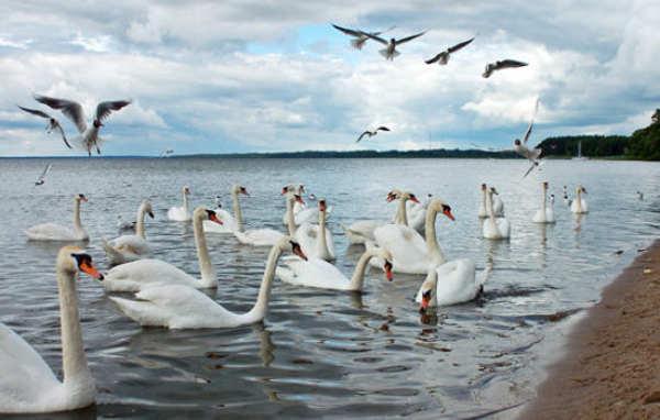 Лебединое озеро в Евпатории фото